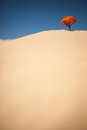 Lonely Plant on Desert Royalty Free Stock Photo