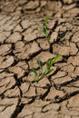Lonely plants in dry soil Stock Photos