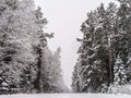 Lonely road in winter forest Stock Photos