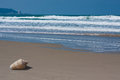 Lonely shell on the beach with waves sand next to of sea mountain in background Stock Image