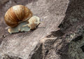 Lonely snail close up in nature the summer Stock Photo