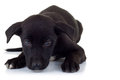 Lonely stray puppy dog lying down Stock Photography