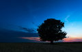 Lonely tree against a blue sky at sunset Royalty Free Stock Image