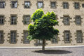 Lonely tree against wall background Royalty Free Stock Photo