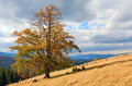 Lonely tree on autumn mountainside Royalty Free Stock Images