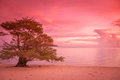 Lonely tree at the beach in sunset Stock Photo