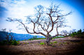 Lonely Tree on a beautiful day in Sahyadris... Royalty Free Stock Photo
