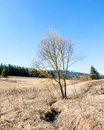 Lonely tree with blue sky forest in background Royalty Free Stock Photo