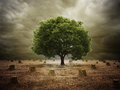 Lonely tree in a deforested landscape single left Royalty Free Stock Photos
