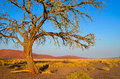Lonely tree in desert Royalty Free Stock Photo