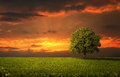 Lonely tree on the empty field at the sunset Stock Photography