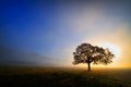 Lonely tree on field Royalty Free Stock Photo
