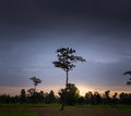 Lonely tree on field at dawn a Stock Photos