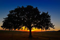 Lonely tree on field at dawn sunrise Stock Photos