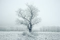 Lonely tree in a field frosted frosty winter landscape Stock Photos