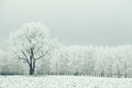 Lonely tree in a field frosted frosty winter landscape Stock Photo