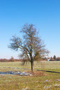 Lonely tree on a field leafless sunny winter day Stock Image
