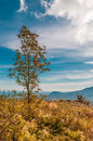 Lonely tree in field with mountains background and blue sky Royalty Free Stock Photo