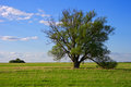 Lonely tree on a field in spring fair weather Stock Photography
