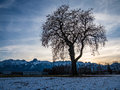 Lonely tree in a field at sunset and mountains Stock Images