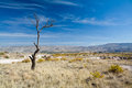 Lonely tree in the field under blue sky Royalty Free Stock Photography