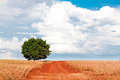 Lonely tree on field under blue sky and different clouds the Royalty Free Stock Images
