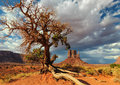 Lonely tree fights for life in the desert Royalty Free Stock Photo