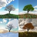 Árbol en cuatro