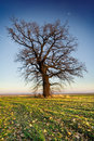 Lonely tree on grean meadow Stock Image