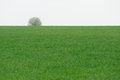 Lonely tree on green field horizontal with space Stock Images