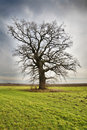 Lonely tree on green meadow