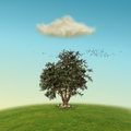 Lonely tree in a hill with birds and one single cloud Stock Photos