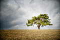 Lonely tree on horizon Royalty Free Stock Photo