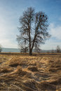 Lonely tree landscape with a lone and dry grass winter season Royalty Free Stock Photo