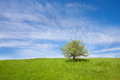 A lonely tree little on grassy meadow Royalty Free Stock Photos