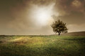Lonely tree in a meadow at dusk Stock Photography
