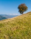 Lonely tree on mountain Royalty Free Stock Image