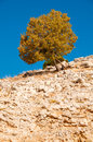 Lonely tree on the mountain landscapes of turkey Royalty Free Stock Photos