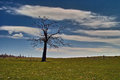 Lonely tree on a mountain top beljanica damaged due to lightning fotogtafisano in early spring before leafing Royalty Free Stock Photography