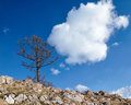 Lonely tree near lake baikal in siberia Stock Images