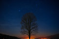 Lonely tree in the night sky Royalty Free Stock Photo