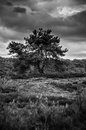 A lonely tree represent life in field in the middle of the forest Royalty Free Stock Photography