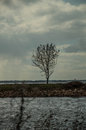 A lonely tree represent life in field in the middle of the lake Stock Photography