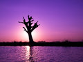 Lonely tree on a river in myanmar Royalty Free Stock Photos
