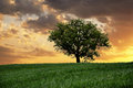 Lonely tree on sky  background Royalty Free Stock Photo