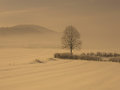 image photo : Lonely tree in snow fog