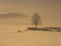Albero neve nebbia