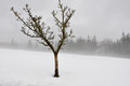 Lonely tree in snow scape spain basque country Stock Photo