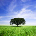 Lonely tree in spring landscape Royalty Free Stock Photo