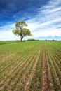 Lonely tree in spring on pature field beautiful Stock Photos